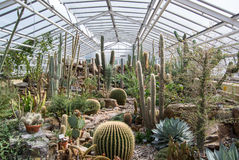 Cacti plants exhibition Royalty Free Stock Image