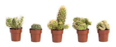 Cacti in pots Stock Photos