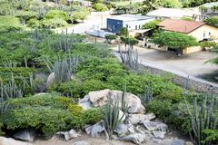 Cacti and rocks in front of homes, Aruba stock photography
