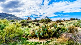 Cacti in the rugged rocky mountains of the McDowell Mountain Range. Around Phoenix, Arizona viewed from the Tom`s Thumb Trail stock photos