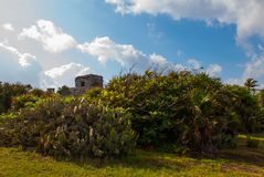 Cacti and ruins of the ancient Mayan city in the archaeological complex of Tulum. Riviera Maya, Yucatan, Mexico.  stock images