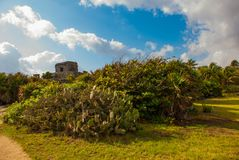 Cacti and ruins of the ancient Mayan city in the archaeological complex of Tulum. Riviera Maya, Yucatan, Mexico.  royalty free stock photo