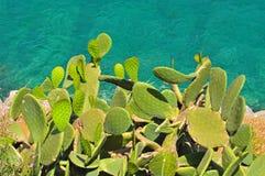 Cactus in sun on the sea coast. Cacti on the sea shore of Mediterranean Stock Photos