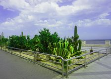 Cacti at the Sea Coast Promenade. Under the Blue Cloudy Sky royalty free stock photos