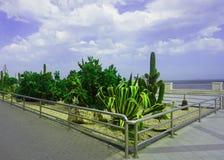 Cacti at the Sea Coast Promenade royalty free stock photos