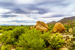 Cacti, Shrubs and large Rocks and Boulders in the Arizona Desert Royalty Free Stock Photo