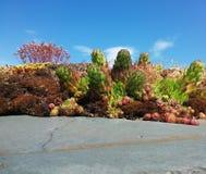 Cacti on Sky Stock Photo