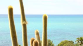 Cacti on the Spanish coast stock video footage