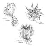 Cacti and succulent ink sketch set. Isolated. Hand drawn outline style Royalty Free Stock Photo