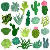 Cacti Succulents Plants Flat Set Stock Photos