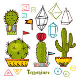 Cacti and succulents in pots. Royalty Free Stock Photography