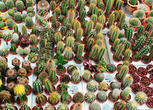 Cacti and succulents in small pots Royalty Free Stock Photography