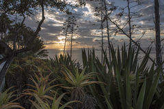 Cacti at sunset. In Gomera Island Stock Image