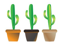Cacti. Three clay pots with cacti plants Stock Photos