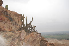 Cacti on Tucume pyramid Royalty Free Stock Photos