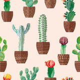 Cacti. Vector of various cacti in pots vector illustration