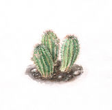 Cacti watercolor painting. The hand drawn watercolor of cacti Royalty Free Stock Photography