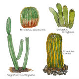 Cacti watercolor sketch set. Isolated. Hand drawn cartoon style Stock Photography