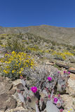 Cacti and Wildflowers Blooming in a California Desert in Spring Royalty Free Stock Photos