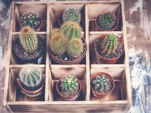 Cacti in wooden box. Photo of various types of cacti. Image toning. Photo of various types of cacti. Cacti in wooden box. Image toning stock photography
