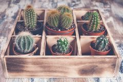 Cacti in wooden box. Photo of various types of cacti. Image toning. Photo of various types of cacti. Cacti in wooden box. Image toning stock photo