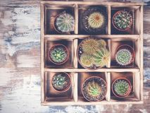 Cacti in wooden box. Photo of various types of cacti. Image toning. Top view. Photo of various types of cacti.Cacti in wooden box. Image toning. Top view royalty free stock images