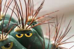 Cacti with yellow eyes and a hostile look collage. Cacti with yellow eyes and a hostile look, collage royalty free stock photos