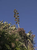 Cactii and Tall Grass in Nerja Andalucia Spain Stock Photos