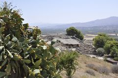 Cactis shrub with ripe fruits in Festos Archaeological Site from Crete island of Greece. On september 2017 stock photo