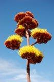 Cacto #2 da agave fotografia de stock