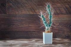Cacto alto com papel-como as espinhas Articulatus longo incomum de Tephrocactus do cacto no potenciômetro no fundo de madeira esc Fotografia de Stock Royalty Free