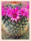 Cacto com flor Imagens de Stock