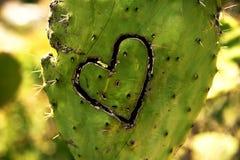 Cacto con el corazón Imagen de archivo libre de regalías