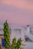 Cacto contra um céu do por do sol Foto de Stock Royalty Free