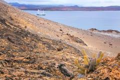 Cacto da lava que cresce na ilha de Bartolome no Pa nacional de Galápagos Fotos de Stock Royalty Free