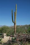 Cacto de Arizona Foto de archivo libre de regalías