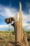 Cacto de decaimiento del Saguaro Fotos de archivo libres de regalías