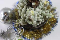 Cacto de Natal Fotografia de Stock