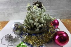 Cacto de Natal Imagens de Stock