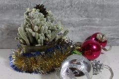 Cacto de Natal Imagem de Stock
