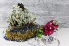 Cacto de Natal Fotos de Stock Royalty Free