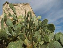 Cacto de pera espinhosa com ruínas em Roma, Texas mim Fotografia de Stock