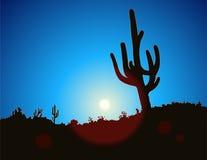 Cacto del cielo azul Fotos de archivo libres de regalías