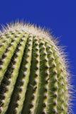 Cacto del Saguaro Imagenes de archivo