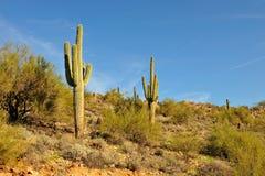 Cacto del Saguaro en desierto Imágenes de archivo libres de regalías