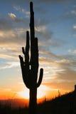 Cacto del Saguaro en la puesta del sol Imágenes de archivo libres de regalías