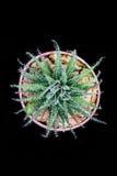 Cacto do close up no potenciômetro Fotos de Stock Royalty Free