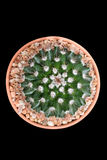 Cacto do close up no potenciômetro Foto de Stock Royalty Free