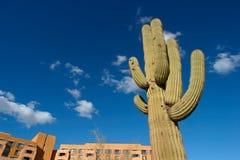 Cacto do Saguaro foto de stock royalty free