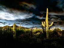 Cacto do Saguaro com nuvens e por do sol da monção Foto de Stock Royalty Free